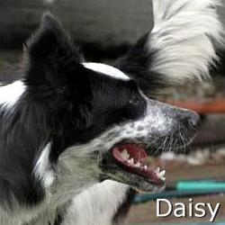 Daisy3_TN.jpg