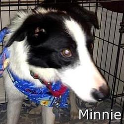 Minnie_TN.jpg