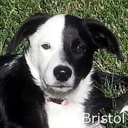 Bristol_TN.jpg