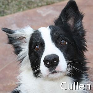 Cullen2_TN.jpg