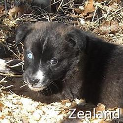 Zealand_TN.jpg