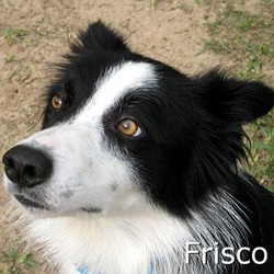 Frisco_TN.jpg