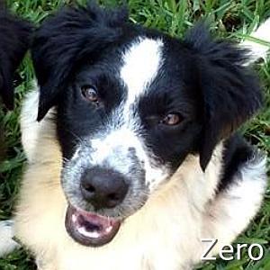 Zero_TN.jpg