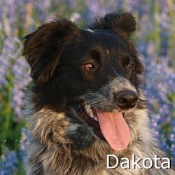 Dakota_New_TN.jpg