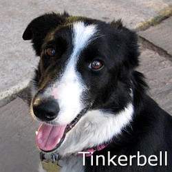 Tinkerbell_TN.jpg