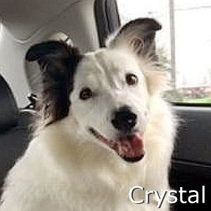 Crystal-TN