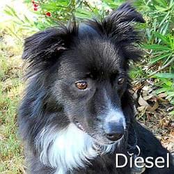Diesel_TN_New.jpg
