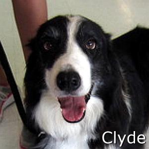 Clyde2_TN.jpg