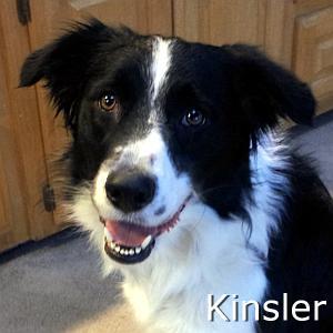 Kinsler_TN.jpg