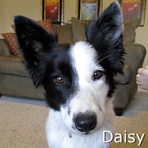 Daisy_A_TN.jpg