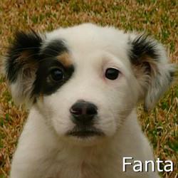 Fanta_TN.jpg