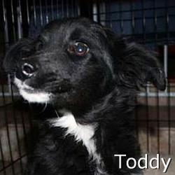 Toddy_TN.jpg