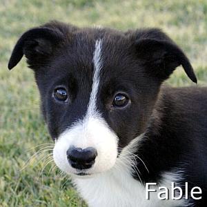 Fable_TN.jpg
