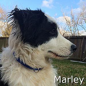 Marley_TN.jpg