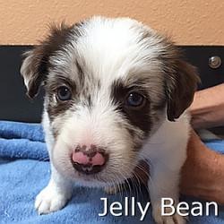 Jelly Bean-TN.jpg