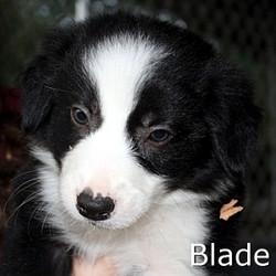 Blade_TN.jpg