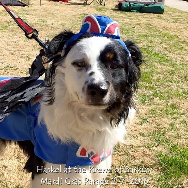 Rescue Rollers Dog Wheelchairs