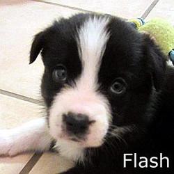 Flash_TN.jpg