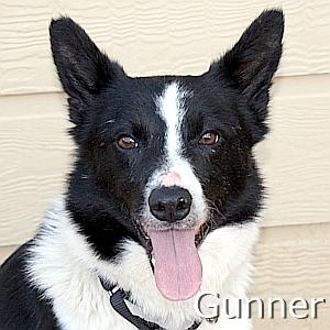 Gunner_TN.jpg