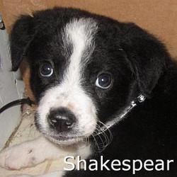 Shakespear_TN.jpg