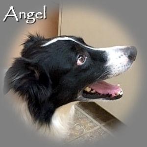 Angel_TN_RIP.jpg