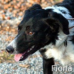 Fiona_TN.jpg