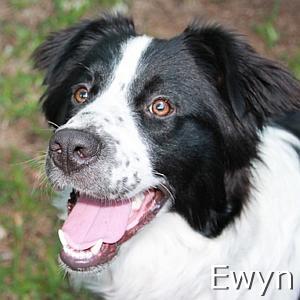 Ewyn_TN.jpg