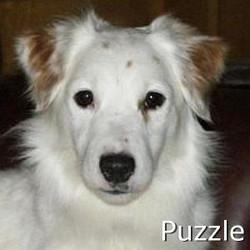 Puzzle_TN.jpg