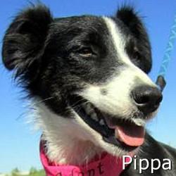 Pippa_TN.jpg