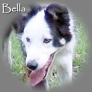 Bella_TN_RIP.jpg