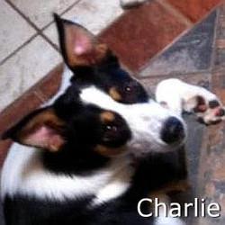 Charlie4_TN.jpg