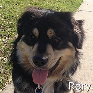 Rory_TN.jpg