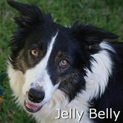 JellyBelly_TN.jpg