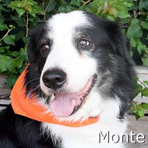Monte_TN01.jpg