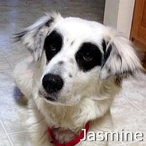 Jasmine_TN.jpg