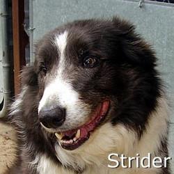 Strider_TN.jpg