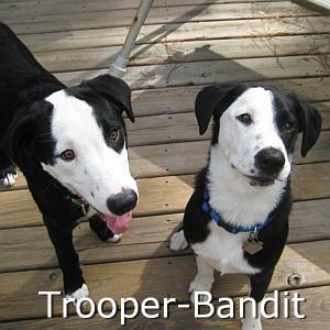 Trooper_Bandit_TN.jpg