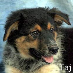 Taj_TN.jpg