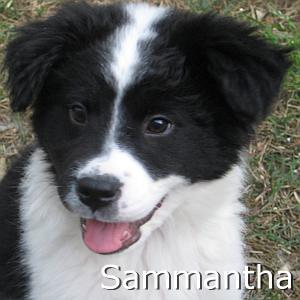 Sammantha_TN.jpg