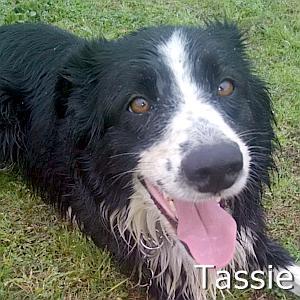 Tassie_TN.jpg