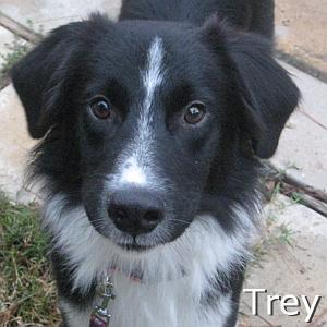 Trey_TN.jpg