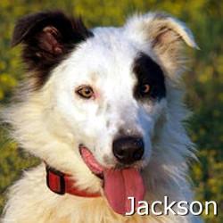 Jackson2_TN.jpg
