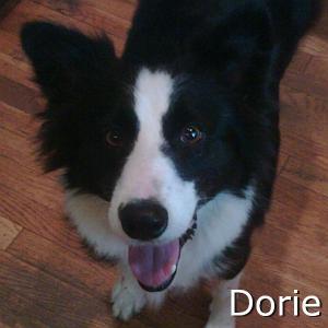 Dorie_TN.jpg