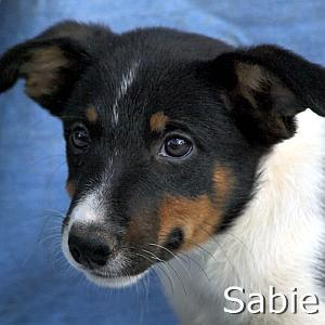 Sabie_TN.jpg