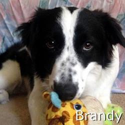 Brandy2_TN.jpg