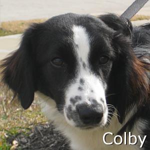 Colby_TN.jpg