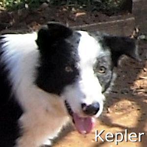 Kepler_TN01.jpg