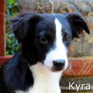 Kyra_TN.jpg