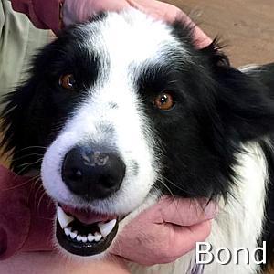 Bond_TN.jpg