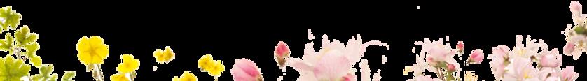 Flowers_720x100pixels_72dpi_RGBcolor tra